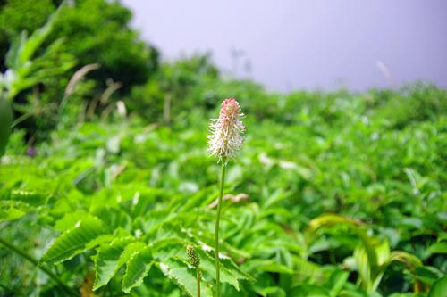 20110814_19.jpg